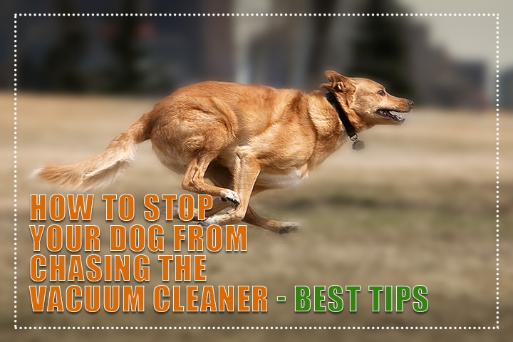 How to Stop Your Dog from Chasing the Vacuum Cleaner - Best Tips