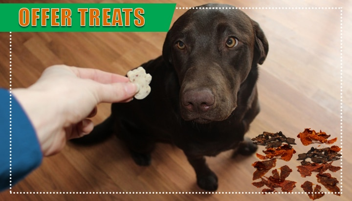 Offer Treats